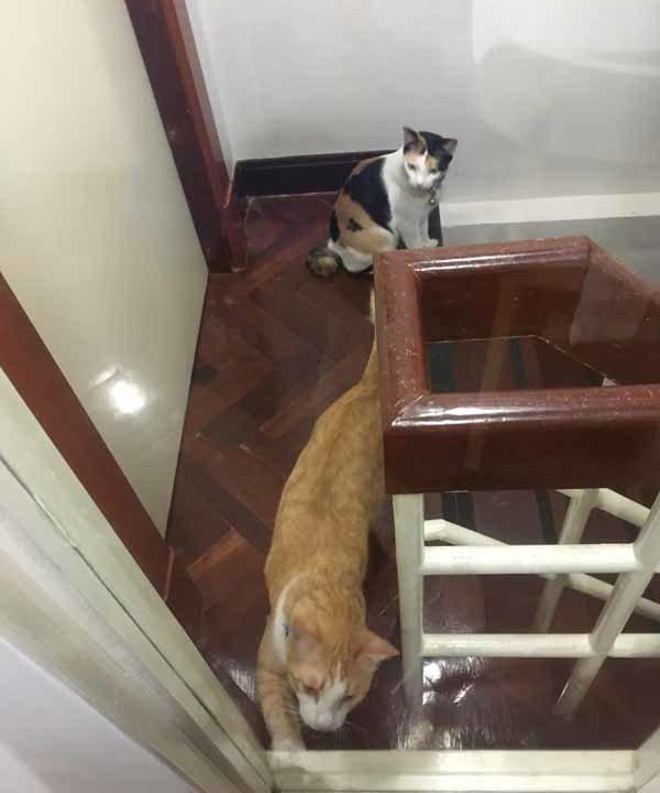 airbnbの猫ちゃん