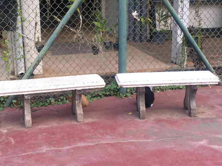 テニスコート
