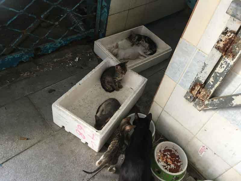 エギナ島の猫