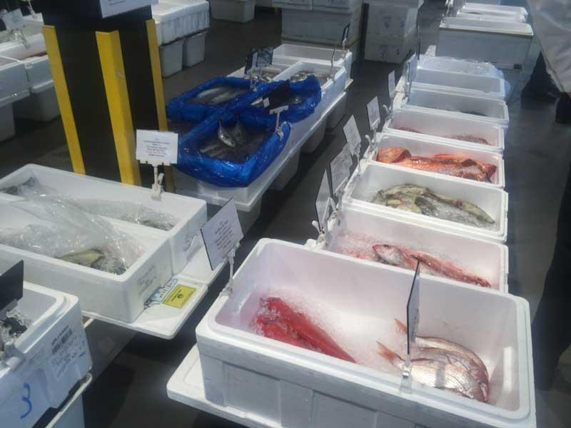 日本生鮮市場